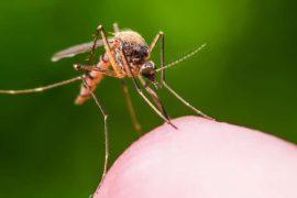 фумигатор от комаров